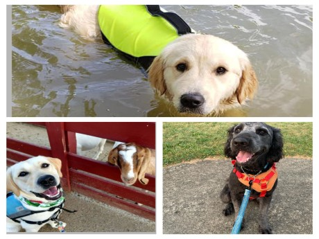 4 Paws for Ability: An Update on Our Sponsored Dogs